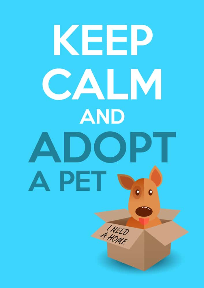 Keep Calm and Adopt A Pet
