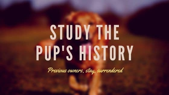 Study The Pup's History