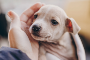 The Ultimate Guide to Adopting a Dog