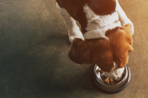 Dog Feeding Guide: Everything You Need to Know