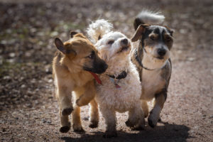 Best Dog Breeds: Most Popular Types of Dogs