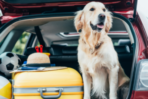 Best Dog Travel Tips: Complete Guide for Dog Owners