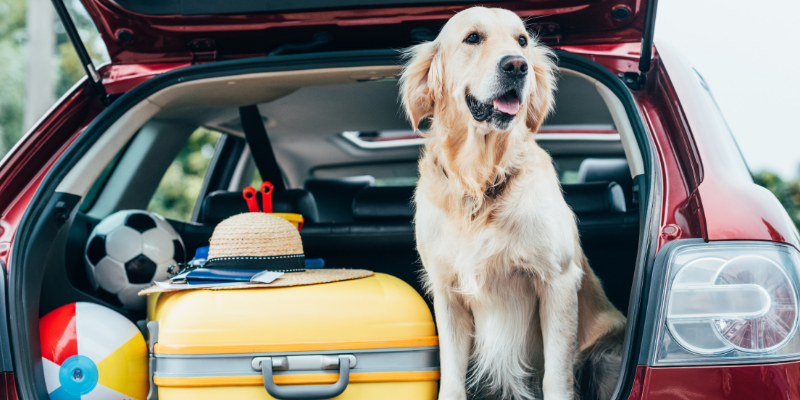 dog travel tips