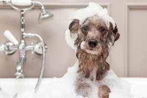 Dog Care Guide: How to Take Better Care of Your Dog