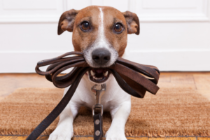 Dog Gear Guide: How to Choose the Best Dog Accessories in 2021
