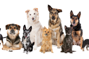 Pet Ownership Statistics: Can't Miss Stats You Should Know Before Getting Your First Dog